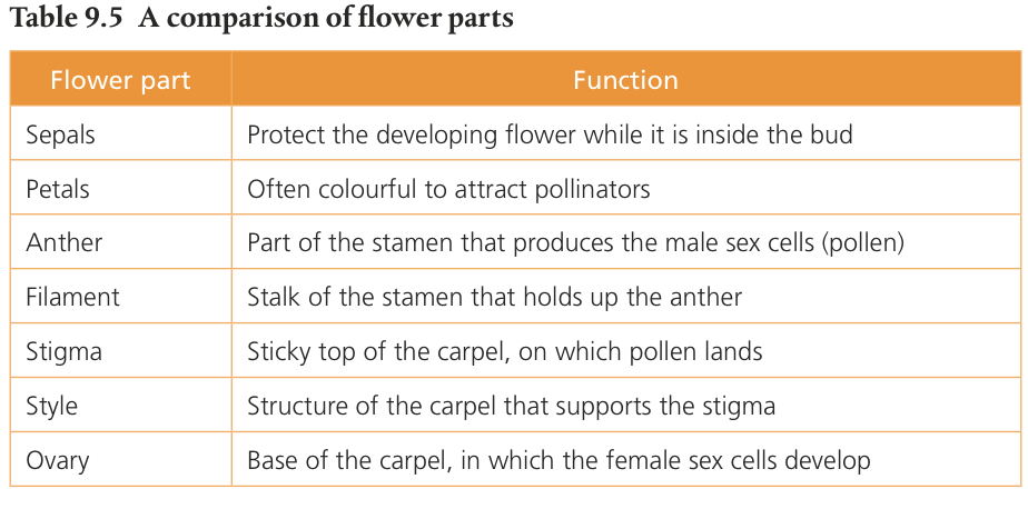 an analysis of plants basic structure and classes in biology A general plant structure we're going to look at plant structure in this section the plants we discuss will be vascular plants that have systems of tubes (xylem and.